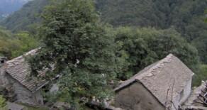Rustico / Casale alpe piazza, Falmenta